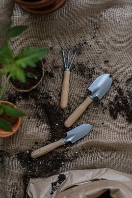 Plantation vanille
